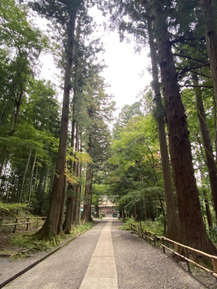 白山神社の参道