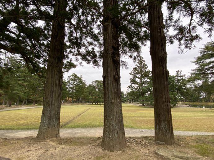 嘉祥寺跡の三本の木