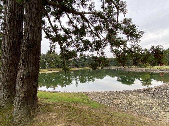 大泉が池と木