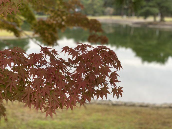大泉が池と紅葉